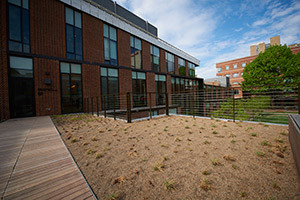 Golkin Hall's green roofs not only increase areas for collaboration in rooftop gardens, but also serve to reduce rain water entering the city's storm water system and the heat-island effect caused by conventional dark roofs.