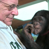 Attorney Steve Wise with Teco, a bonobo at the Iowa Great Ape Trust. (Photo courtesy of Pennebake...