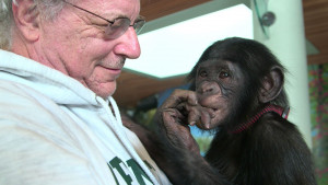 Attorney Steve Wise with Teco, a bonobo at the Iowa Great Ape Trust. (Photo courtesy of Pennebaker Hegedus Films.)